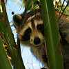 Wildlife at Myakka River State Park Photo Credit: Gary Warren